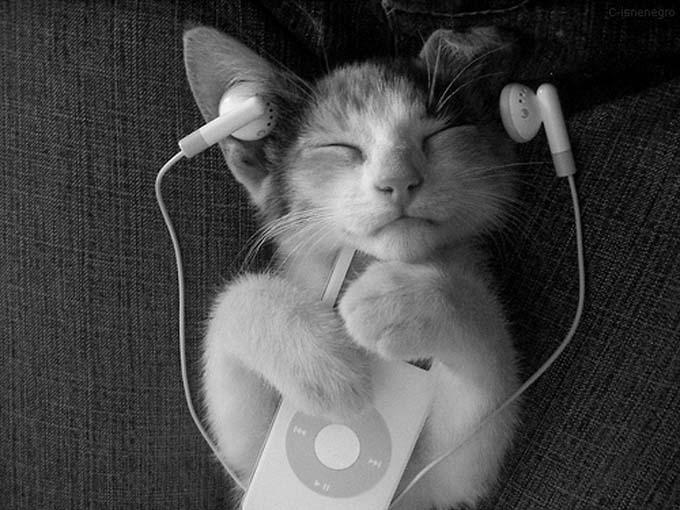musica-para-gatos-zupi-1