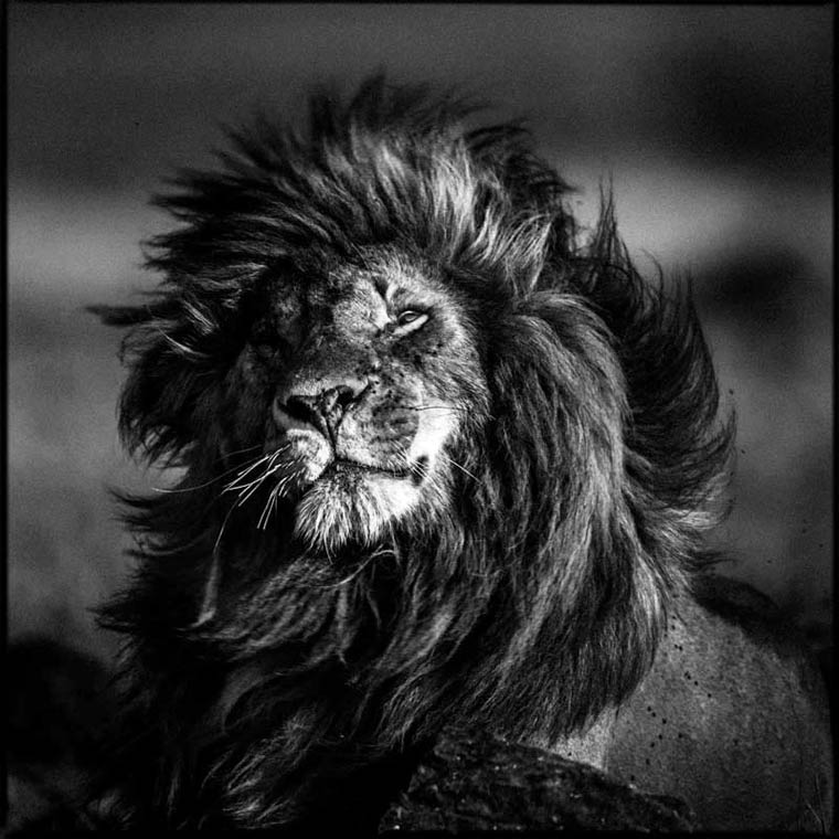 animais-africa-1