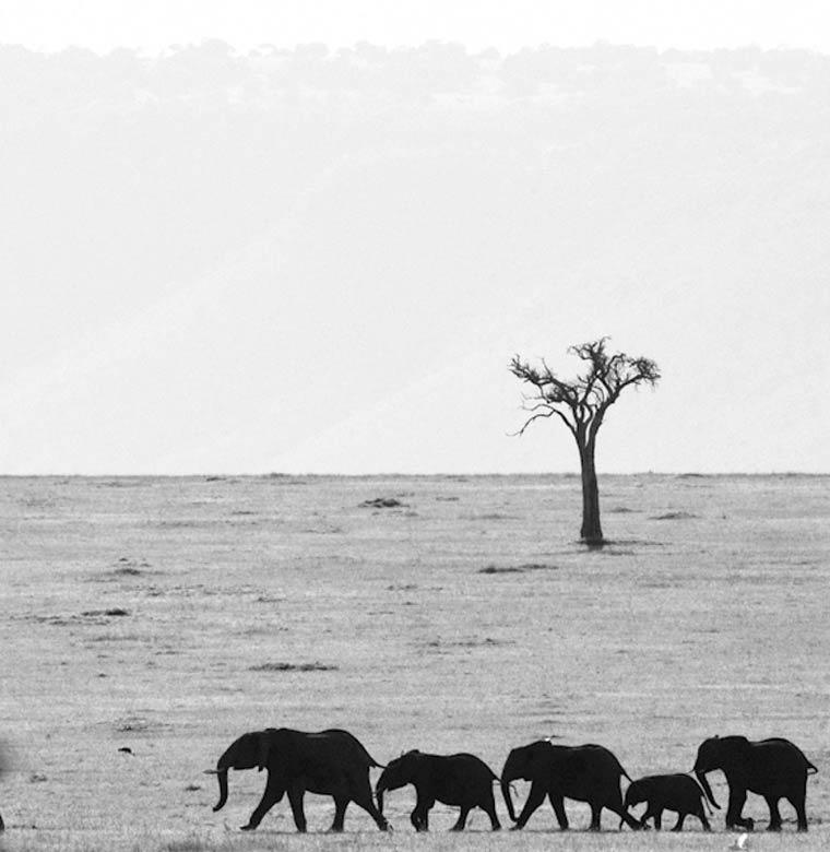 animais-africa-2