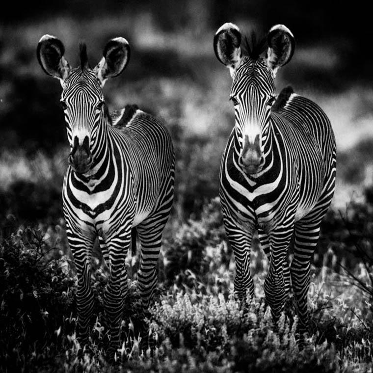 animais-africa-3