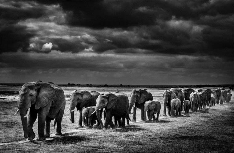 animais-africa-4