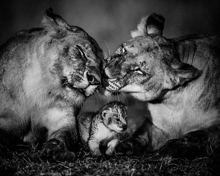animais-africa-5