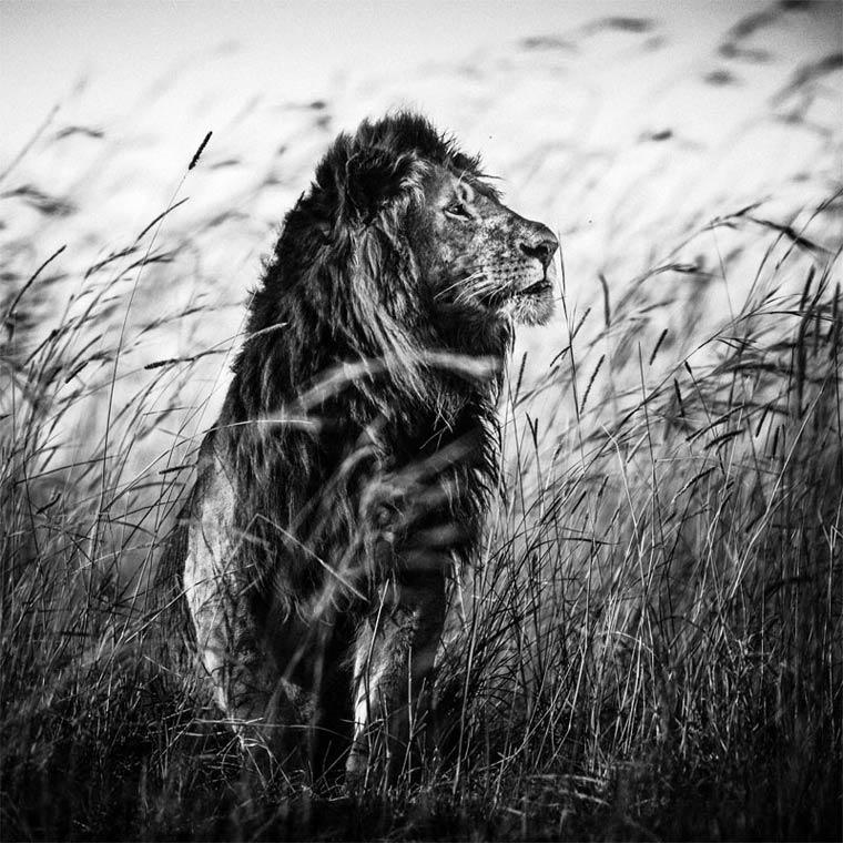 animais-africa-6