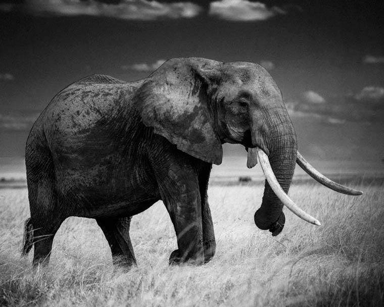 animais-africa-7
