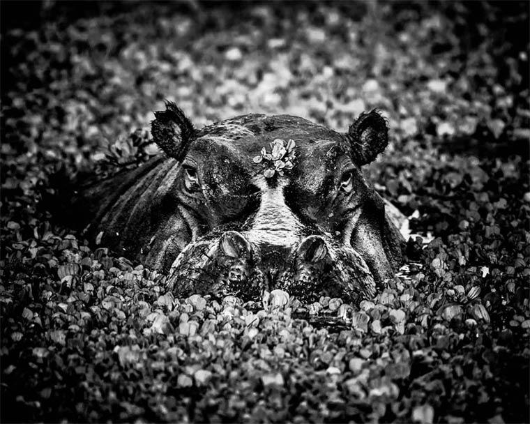 animais-africa-8