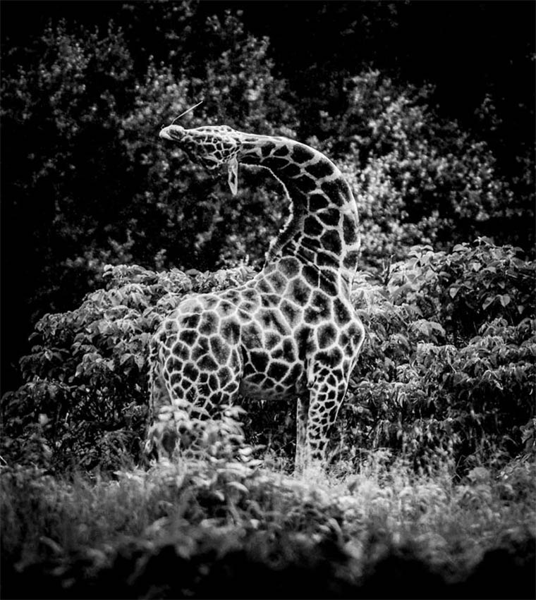 animais-africa-9